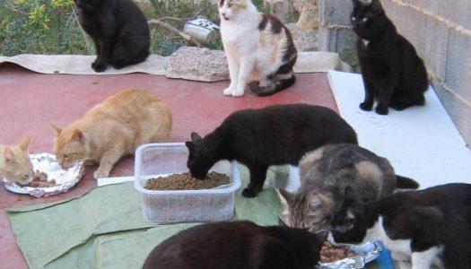 PACMA busca una solución ante el próximo desahucio de una colonia de gatos en Russafa