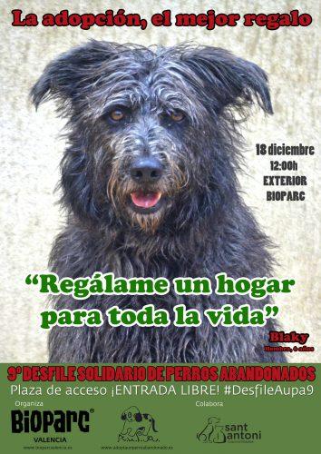 Desfile solidario perros abandonados Bioparc y AUPA