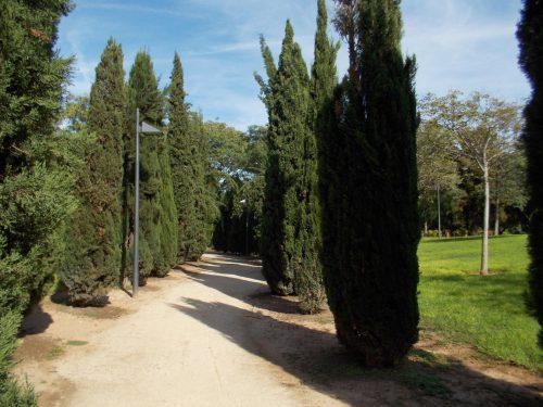 ¿A dónde nos llevará el paseo de los Cipreses?