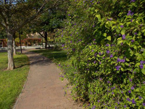 Caminos arbolados y llenos de flores
