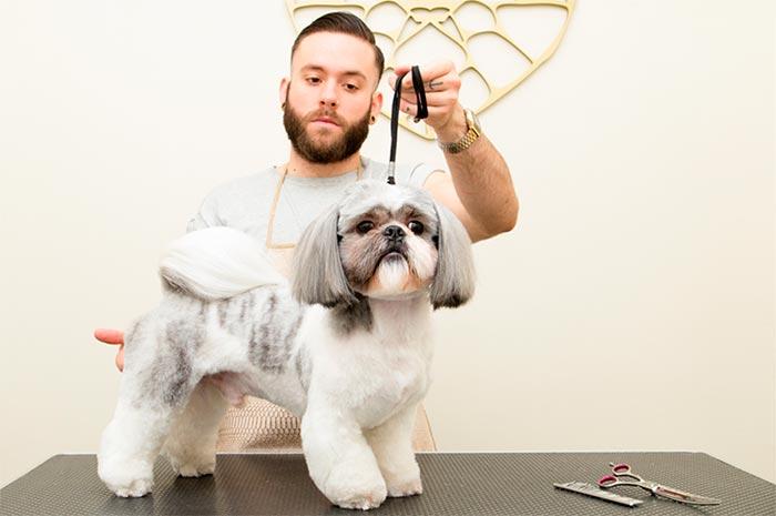 corte-pelo-perro