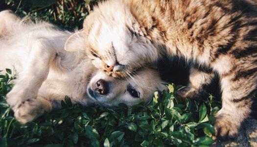 ¿Es posible la convivencia entre perros y gatos?