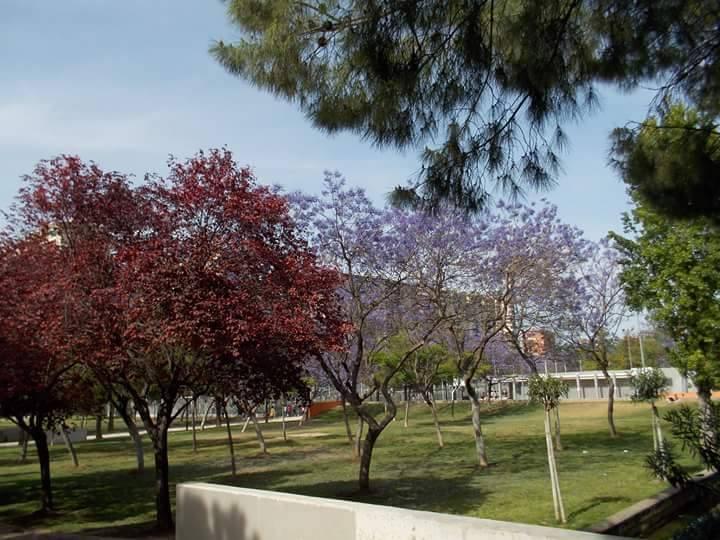 Jardín del Turia