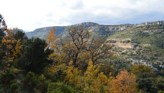 Los 7 árboles más comunes de los montes valencianos