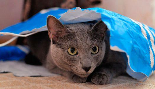 5+1 falsos mitos sobre los gatos