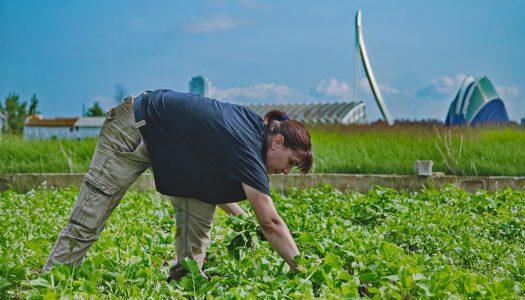 """Exposición """"La Tira de Contar, los actores de la agricultura de proximidad"""" en Molí Lab (Carpesa)"""