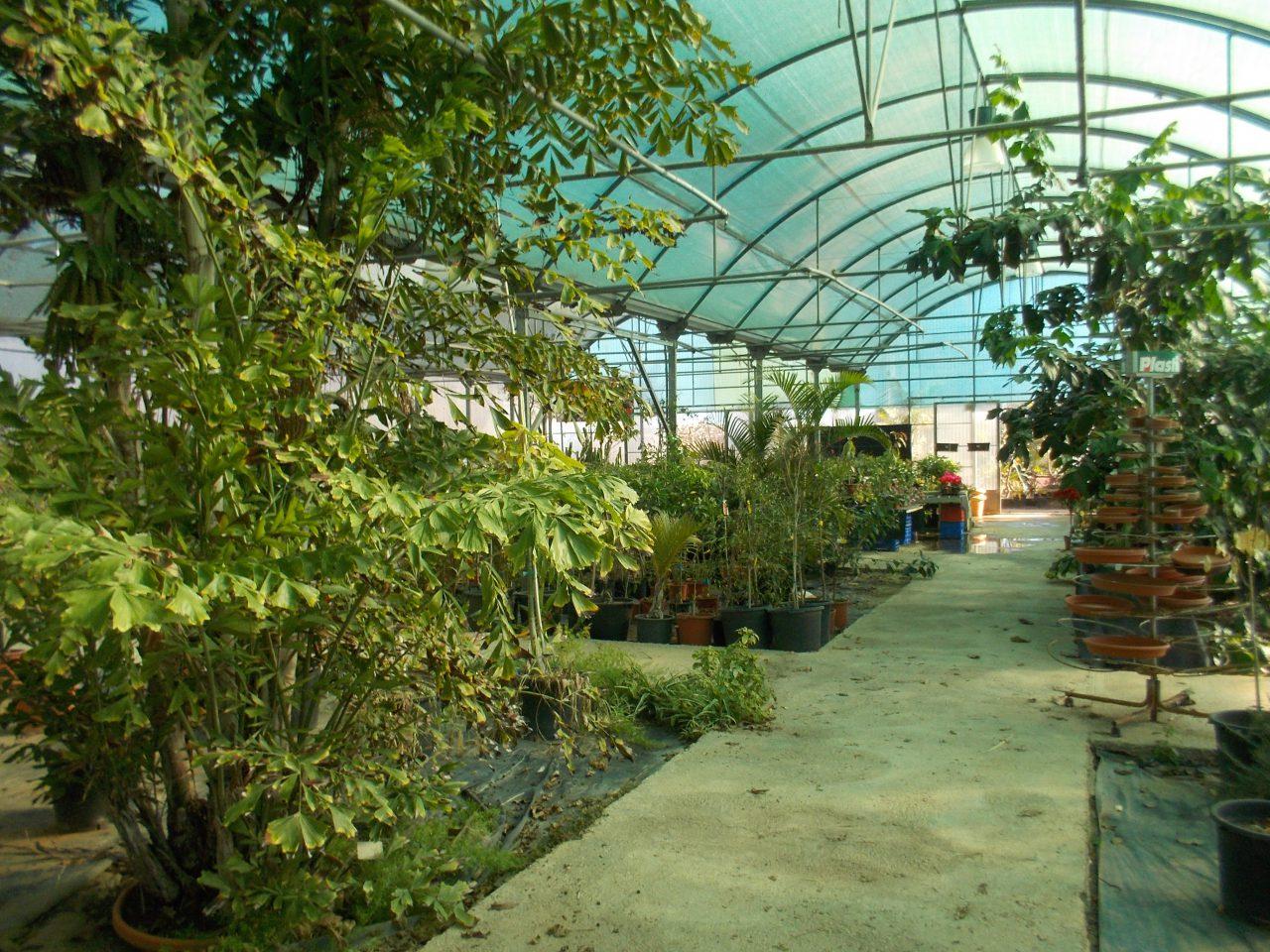 El asombroso jard n bot nico de cullera un peque o - Jardin botanico valencia ...
