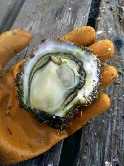 Comer ostras en Valencia