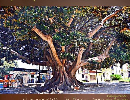 Exposición de fotos de árboles monumentales en Vinyl-Eye