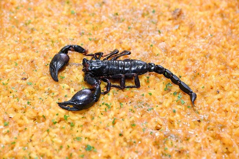 Entomofagia: comer insectos