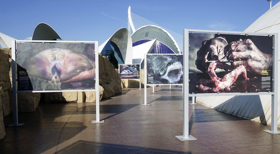 exposición SOS Tiburones