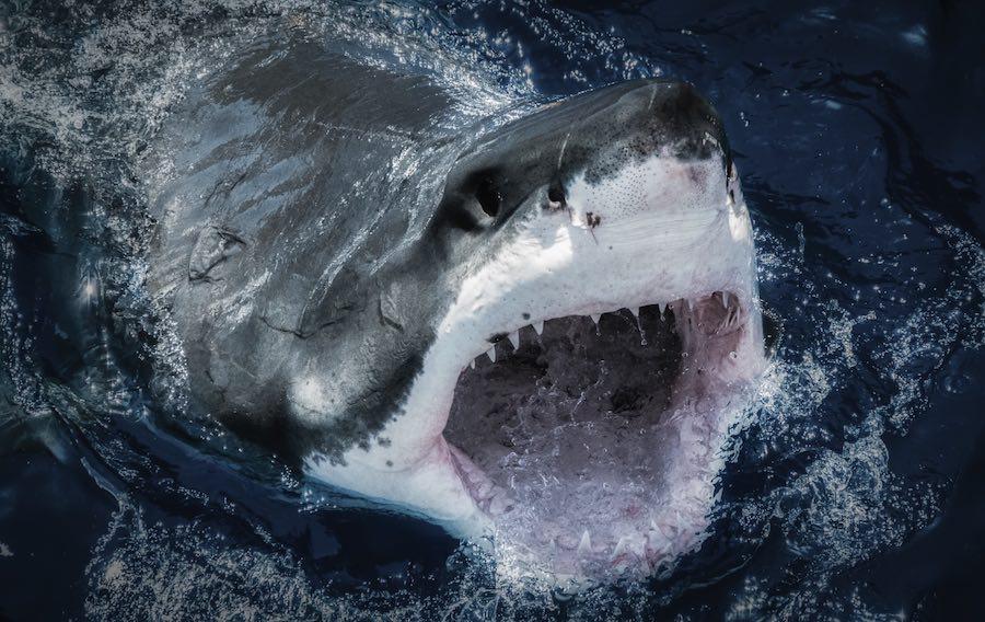 Campaña de concienciación sobre los tiburones, organizada por el Oceanogràfic