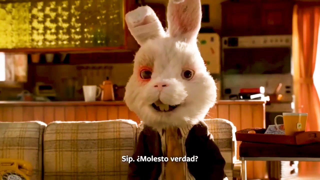 Vídeo del conejo