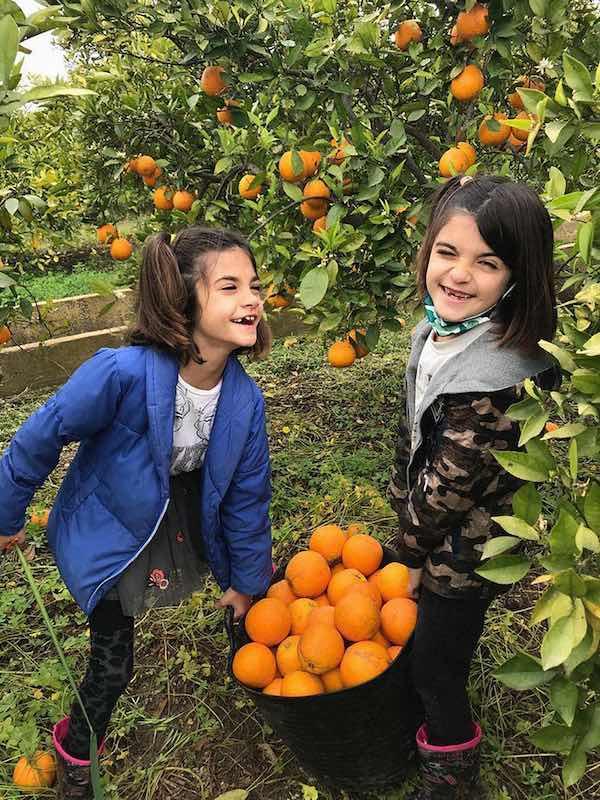 naranjas twins